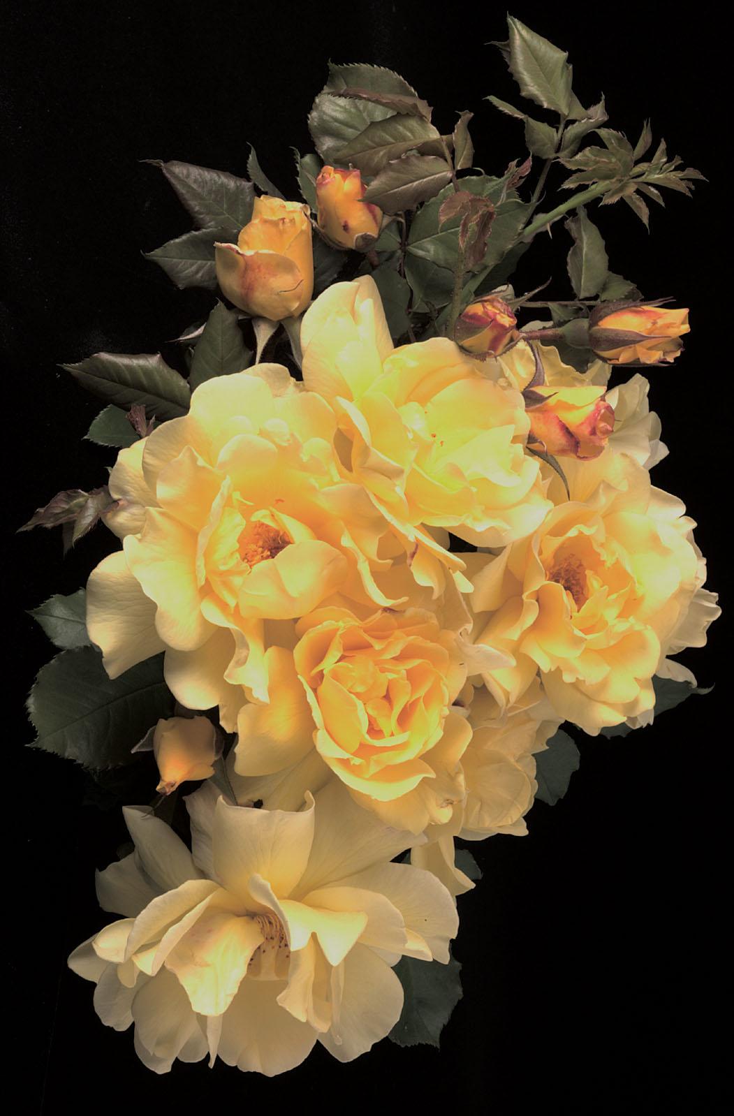 85343_LemonMeringue